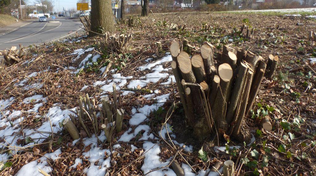 stehen baumpilze unter naturschutz