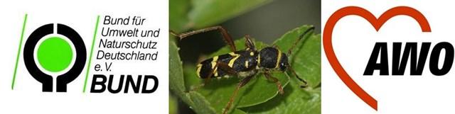 Einladung Käfer im Totholz