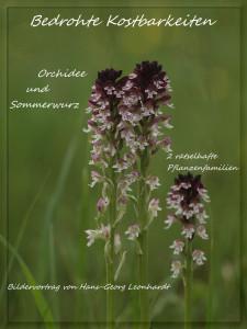 Orchideen-Vortrag