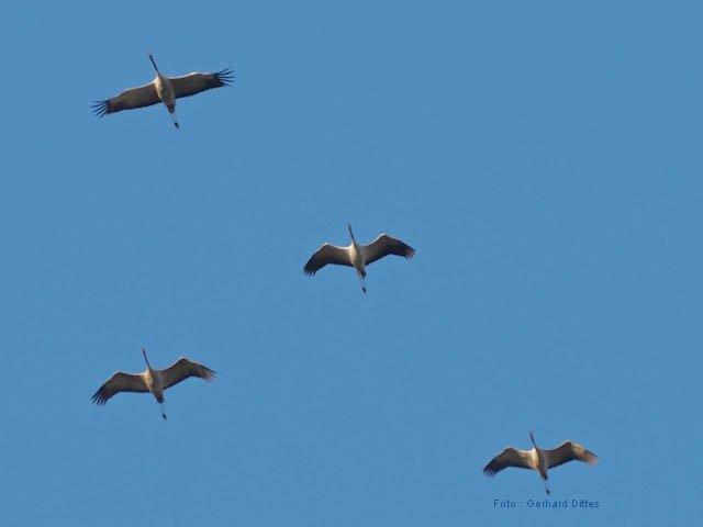 finest selection 454e4 0e1f1 Tag: Vögel | BUND Ortsgruppe Bretten