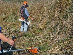 Sanierung eines Feuchtgebietes durch die Ortsgruppe Bretten